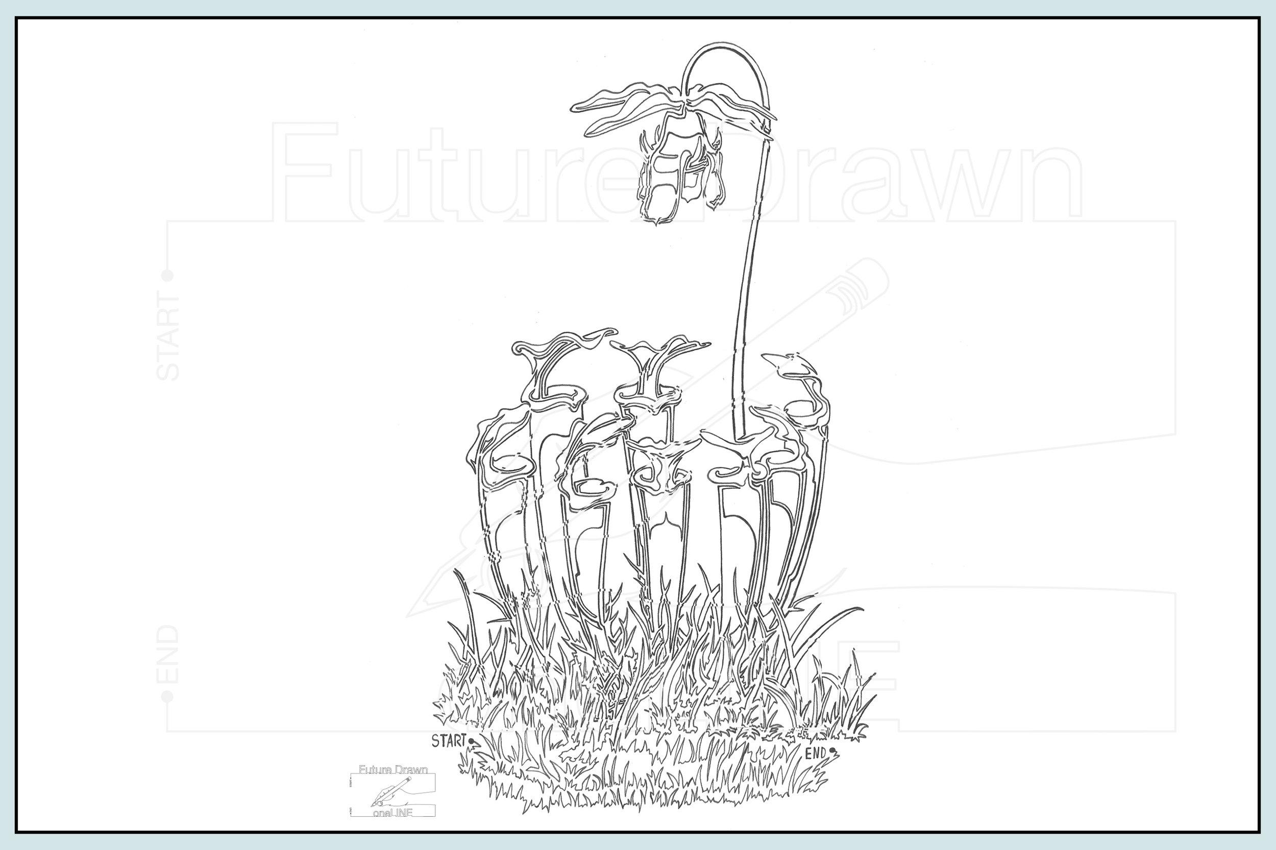 Web- Sarracenia oneLINE botanical- oneLINE Future Drawn Applegate.jpg