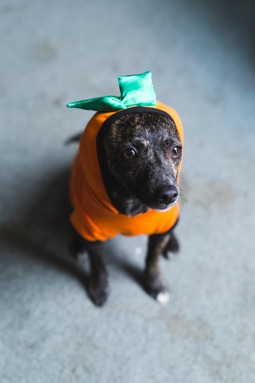 Pumpkin Jules-8.jpg