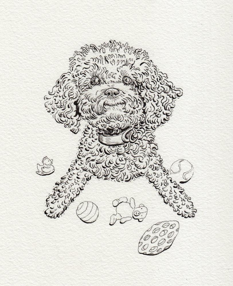 Poodle-doodle (Winnie)