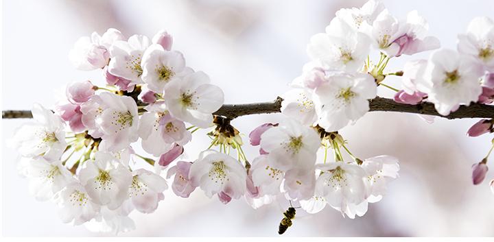 140402_spring_0011-Edit.png