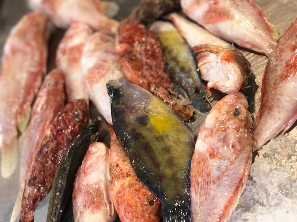 Fish pic.jpg