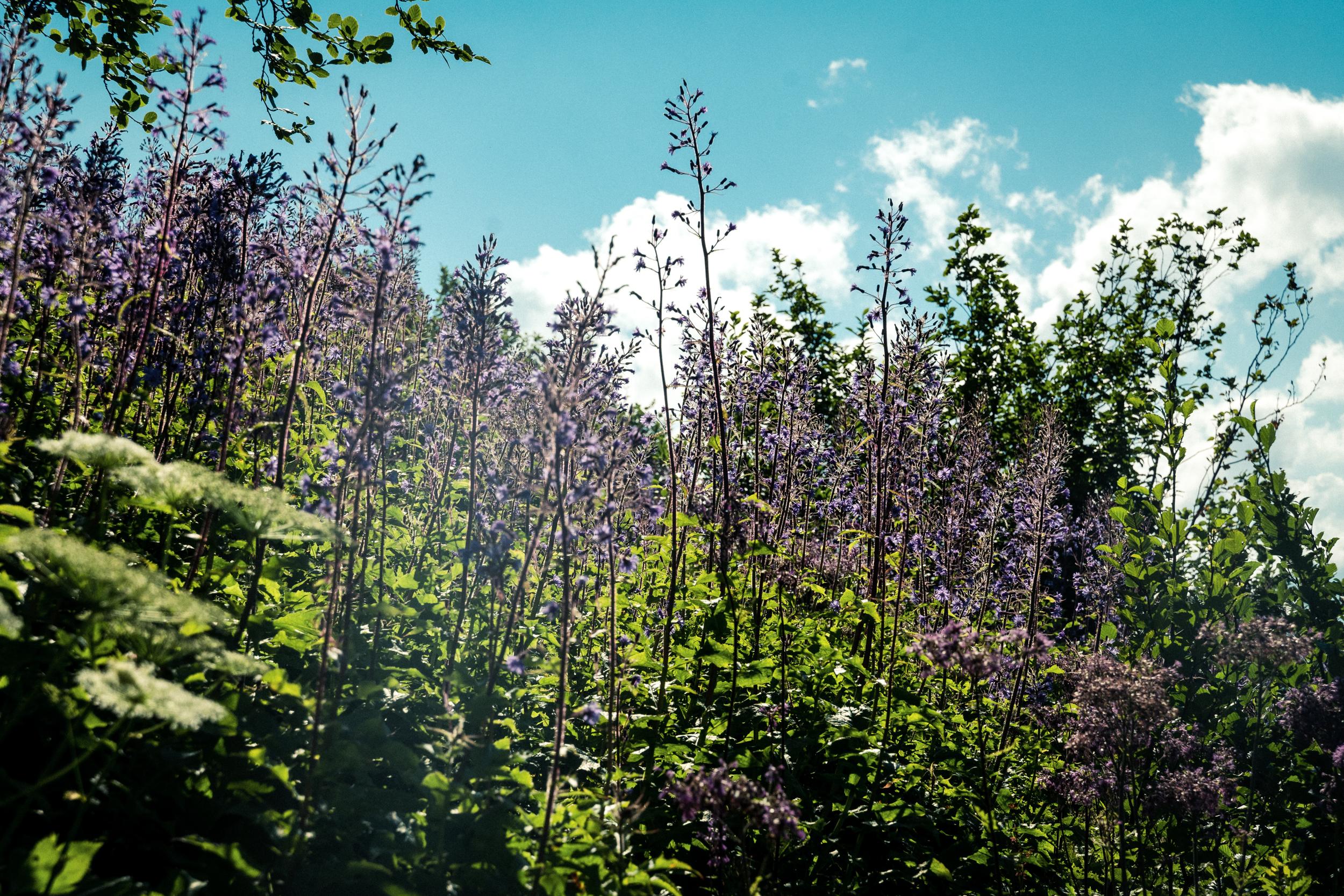 wunderschöne Flora der Alpenwelt