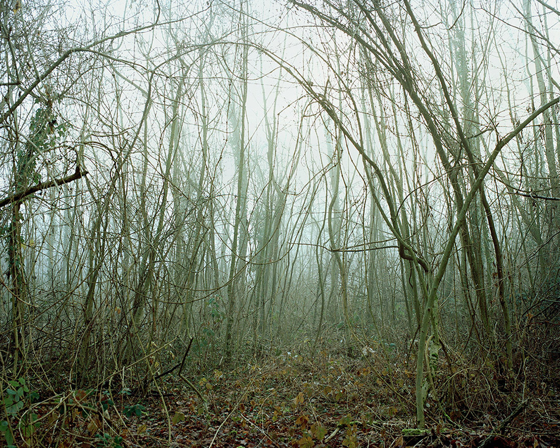 Jeanne Martel_landscapes_02.jpg