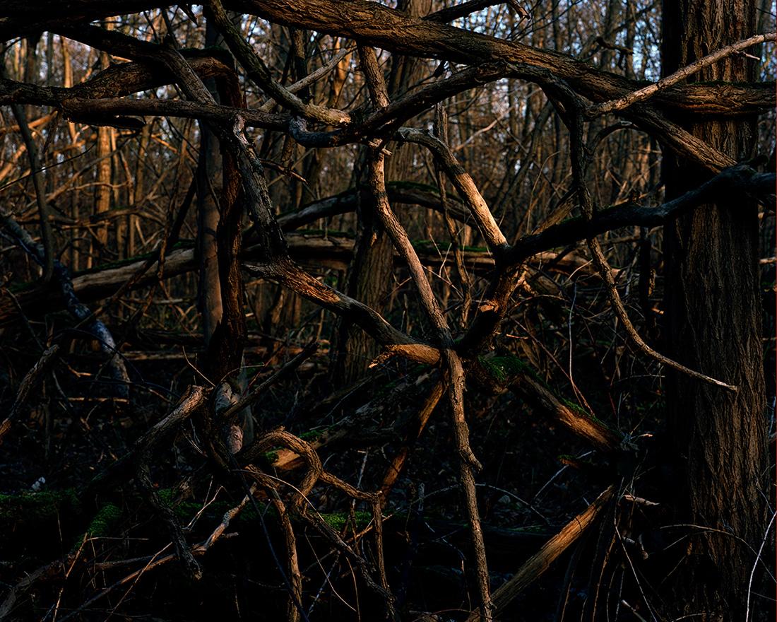 Jeanne Martel_landscapes_05.jpg