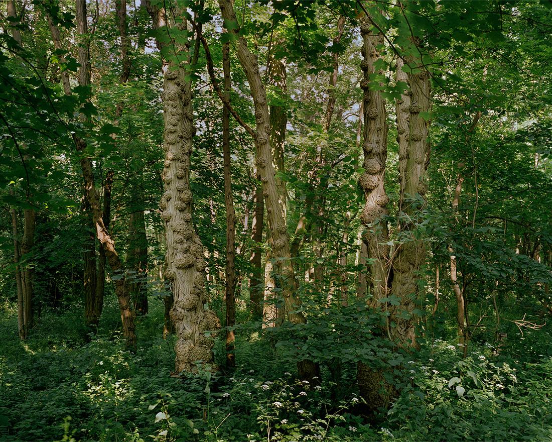 Jeanne Martel_landscapes_09.jpg
