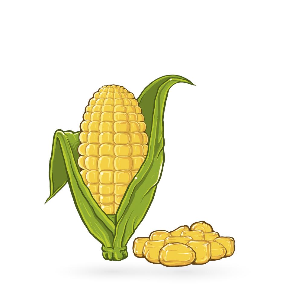 Maissi