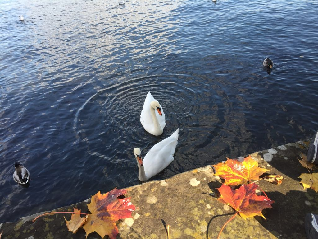 Walking down the Zurich lake on a Sunday in October during a 'pace 1' afternoon, reminded me of the funny picture below someone shared with me.
