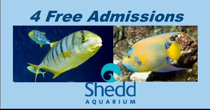Shedd Aquarium 2.jpg