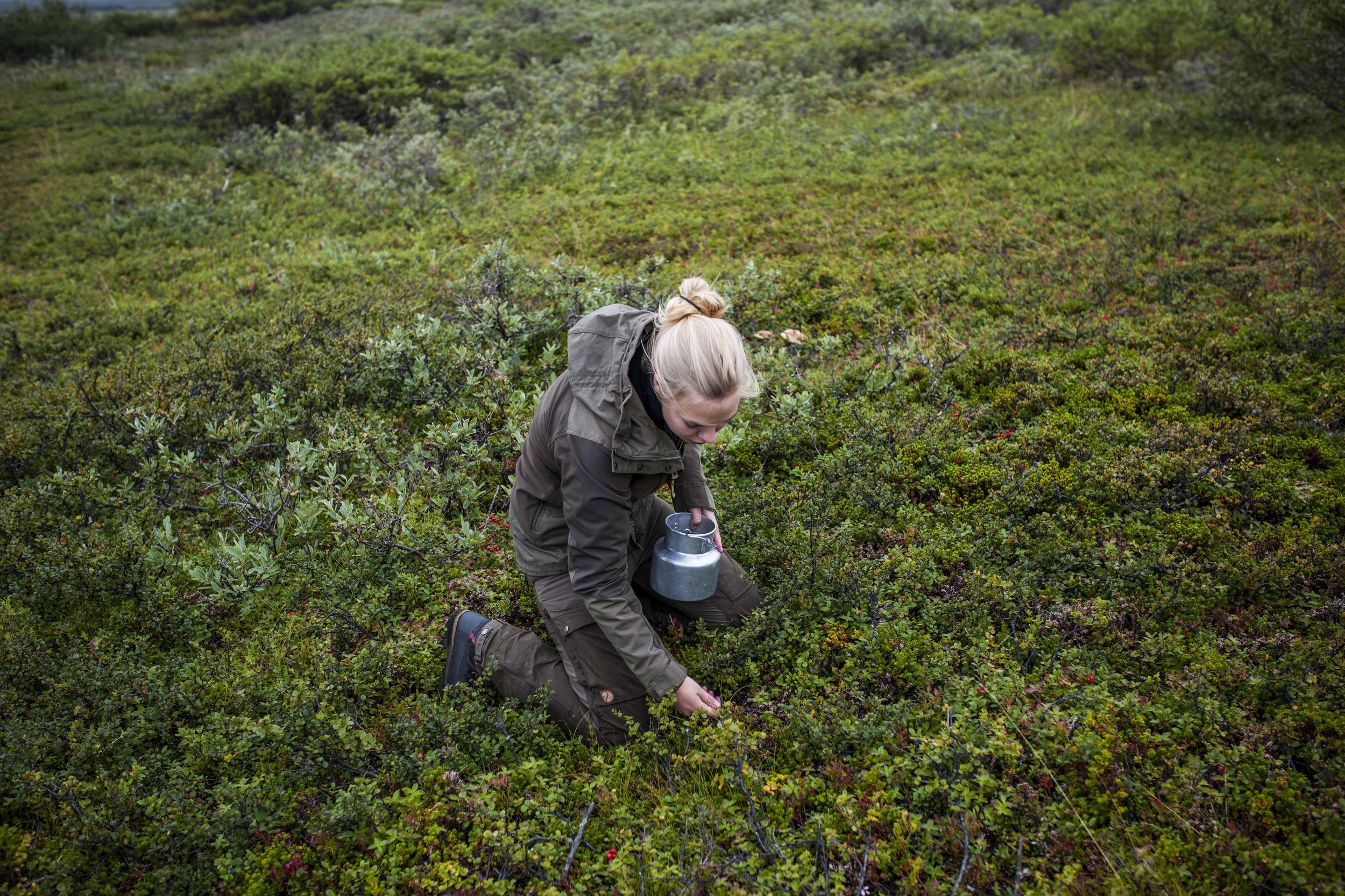Me picking blueberries. Photo by Ylva