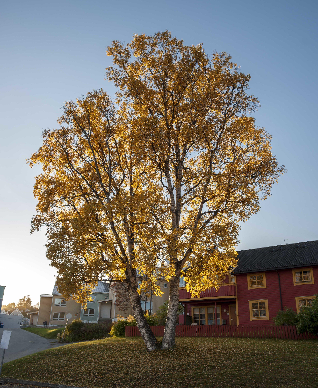 Tromsø autumn colours