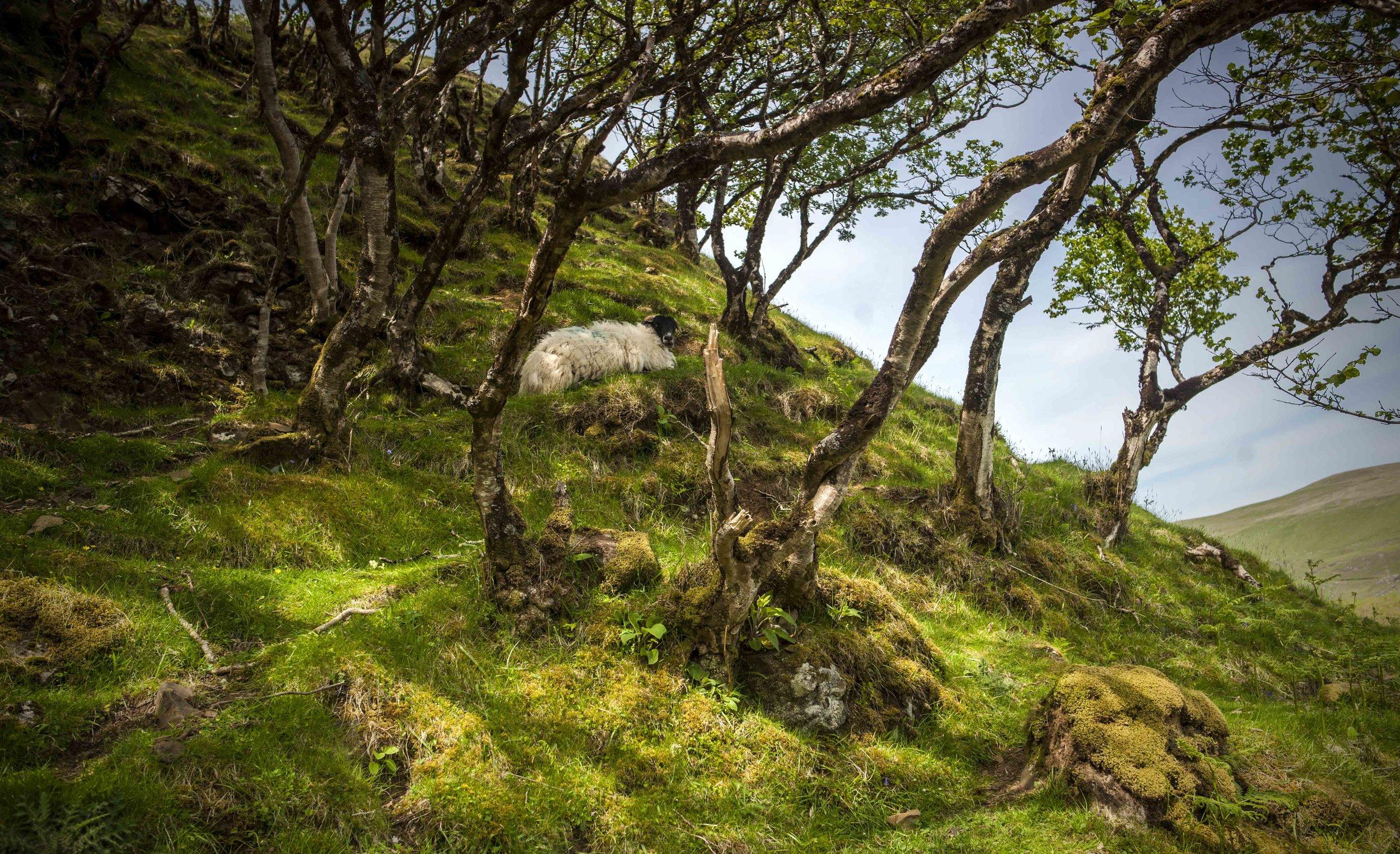 Uig, Isle of Skye - Scotland