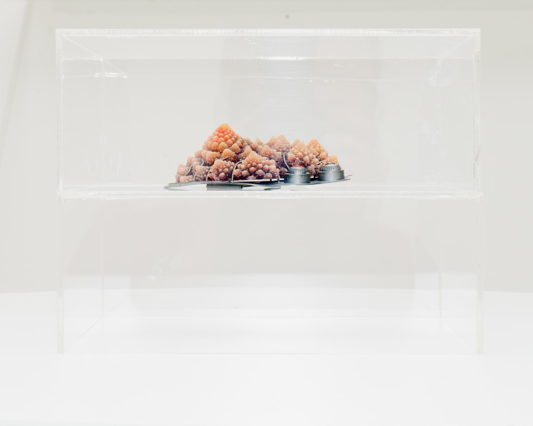 exhibition view,  Selected Stories , foreground work by Barbara Paganin, photo: Riccardo Banfi