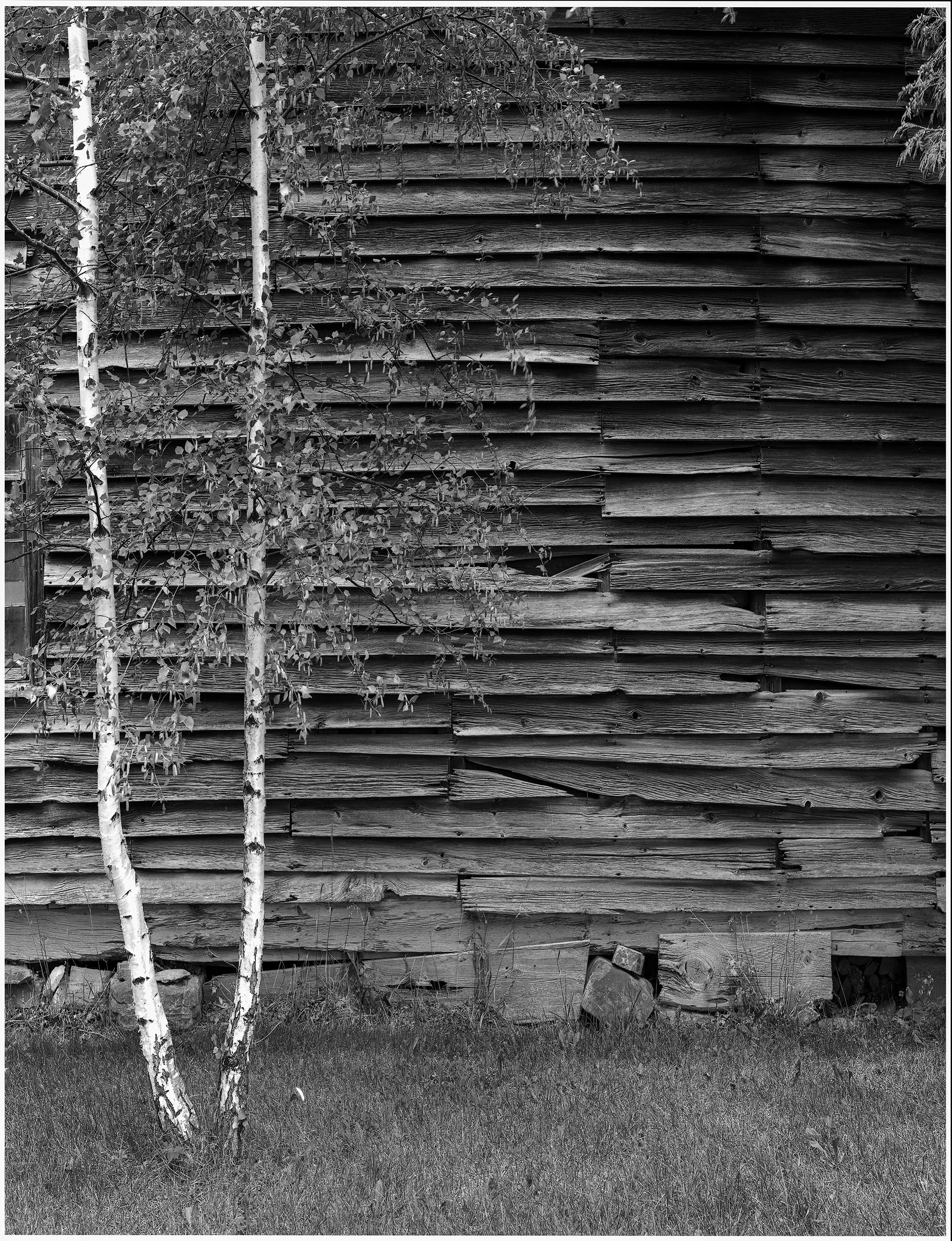 White Trees & Barn.jpg