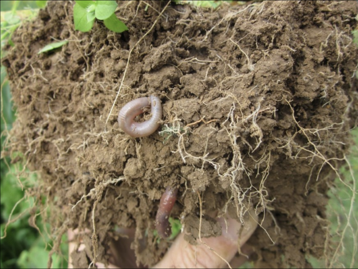 The Real Dirt on Dirt: A Workshop on Soil & Health - for Virginia farmers, foodies and families