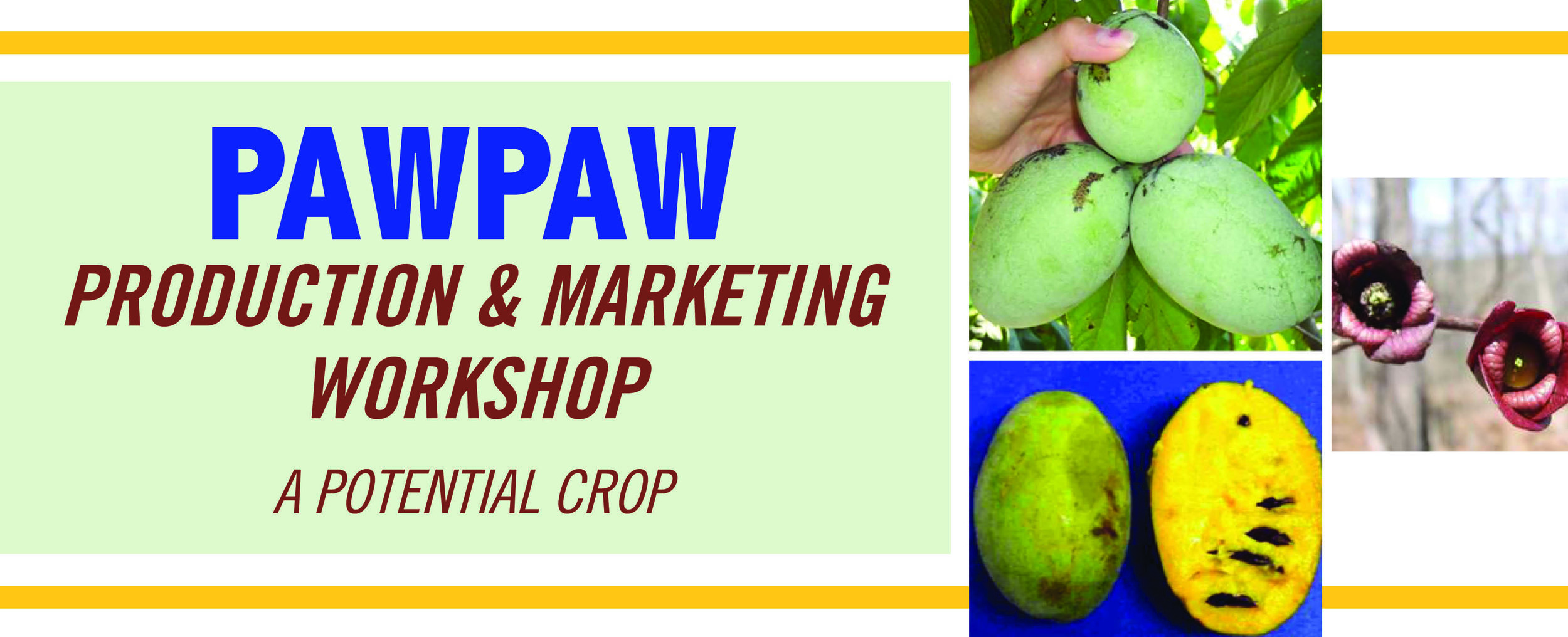PawPaw Production_banner.jpg