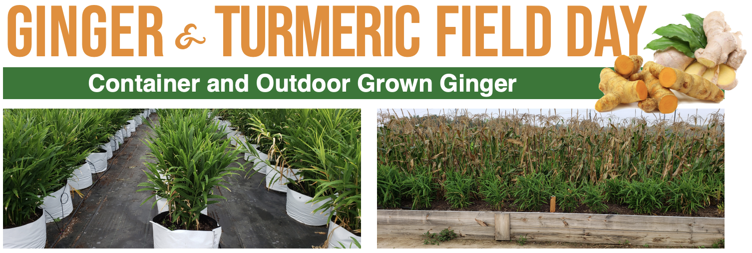 Ginger & Turmeric Field Day Banner