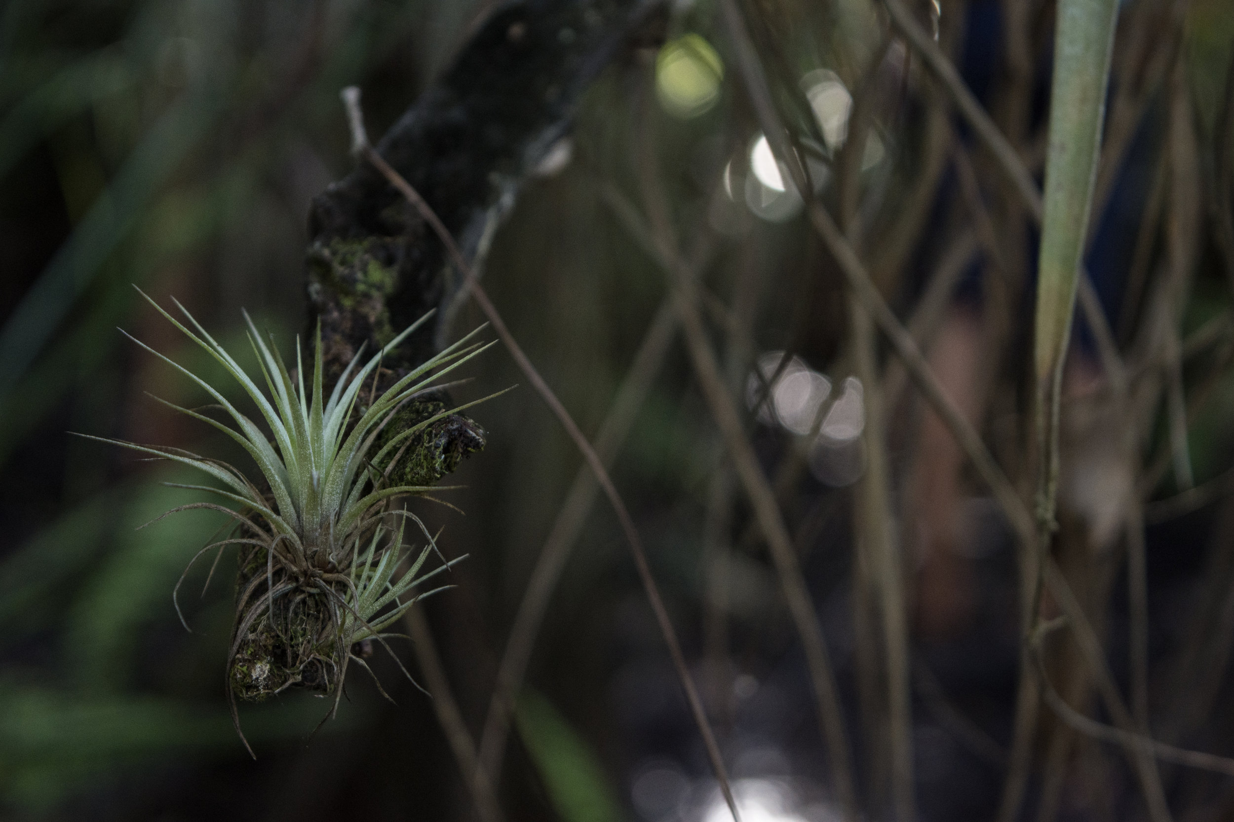 Bromeliads, a type of air plant!  Photo Credit: Mike Kowalski