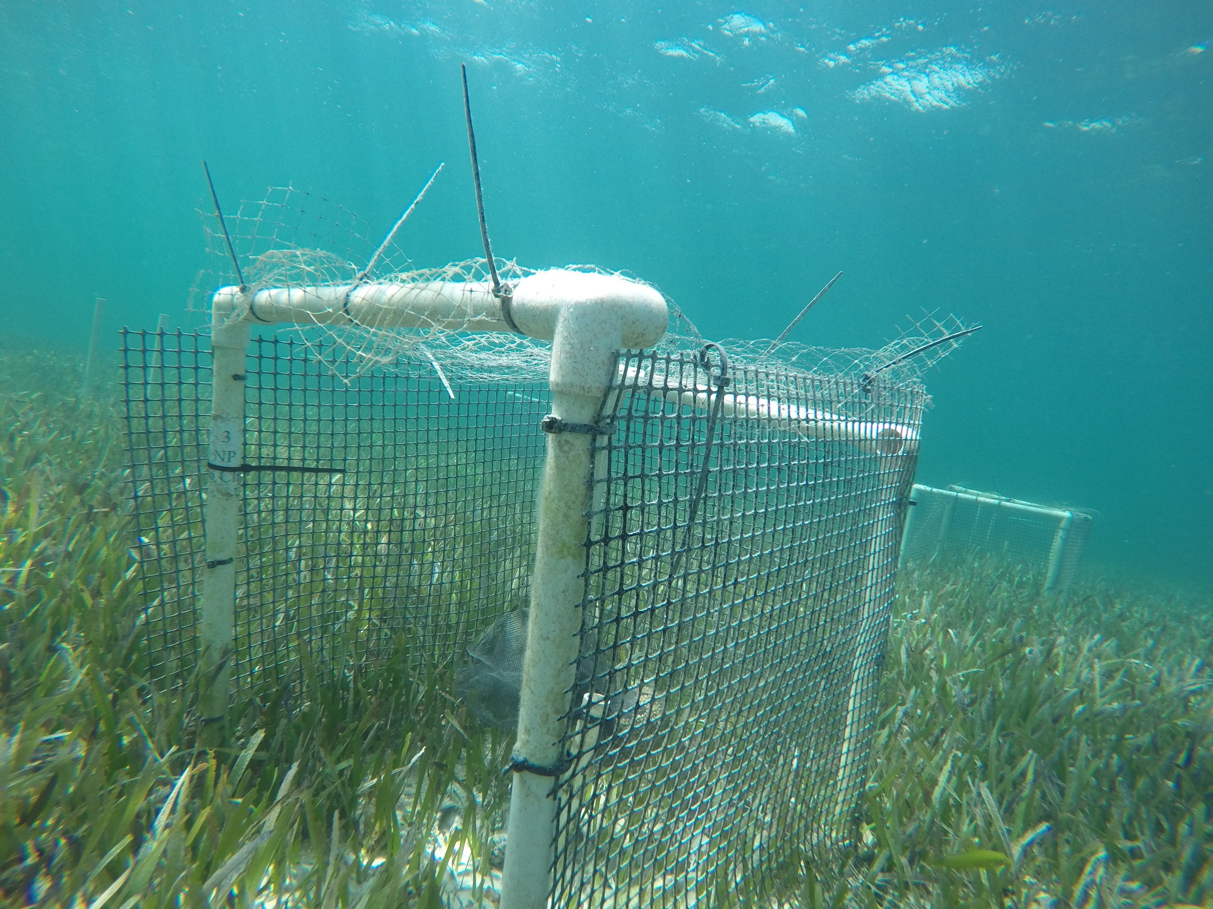 Andros Seagrass Site