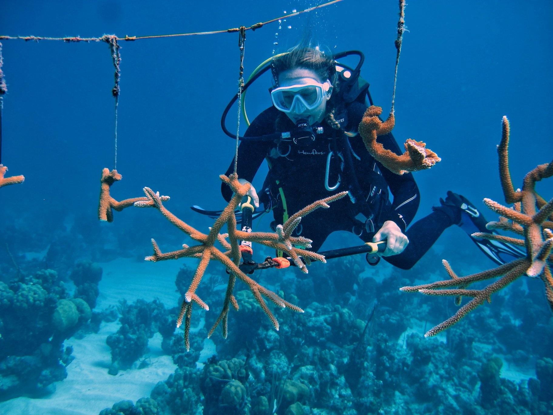 corals+scuba+-+reef+rescue.jpg
