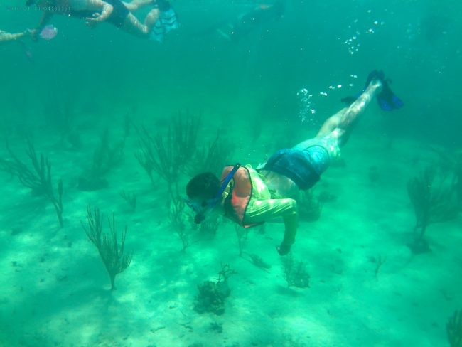 Local science students visit Andros Island for learning experience - June 2019, Manistee News