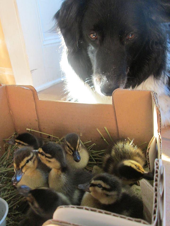 dante with ducks.jpg