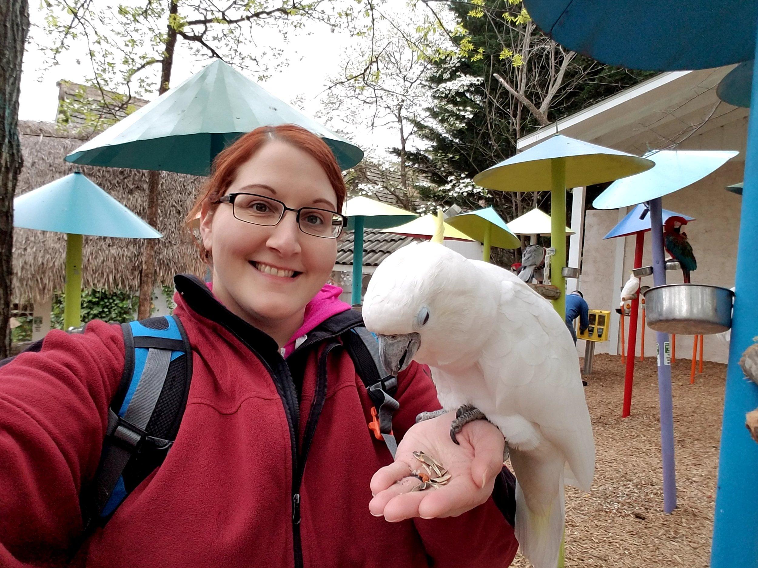 Parrot Mountain Gatlinburg feeding birds.jpg