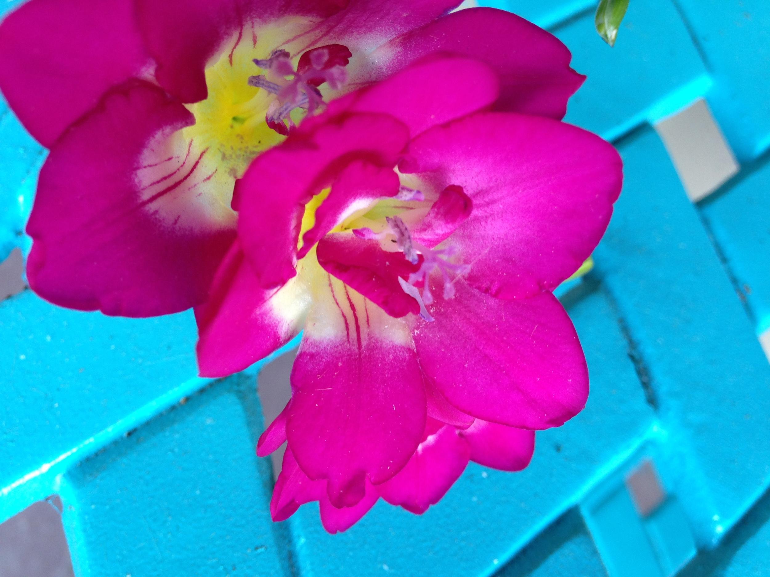 2014 spring 346.jpg