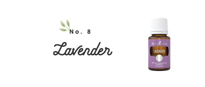 Lavender101.jpg
