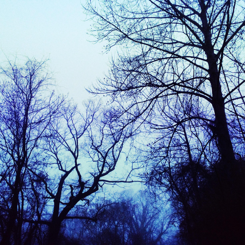 blue afternoon 3.jpg