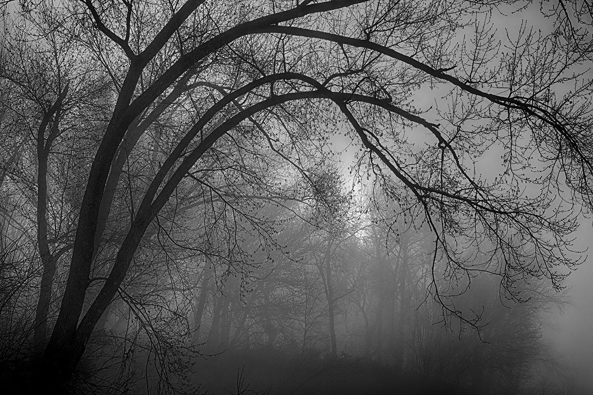 MourningTrees-CraigUnderwood.jpg
