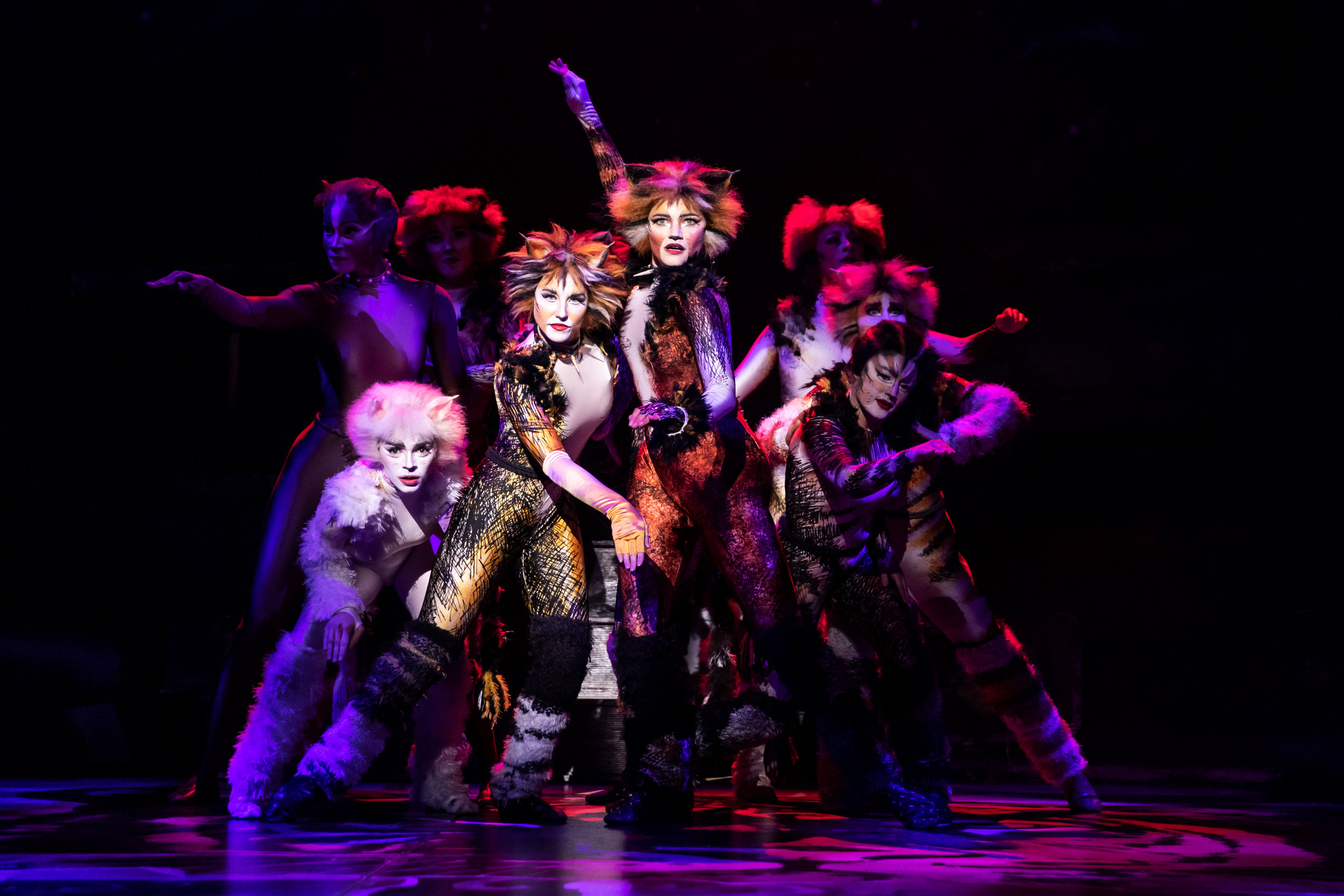 The North American Tour Company of CATS. Photo by Matthew Murphy. 2019 (1).jpg