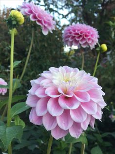 Sweet Love pink.jpg