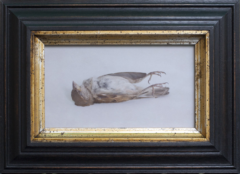 The Love Letter ( Fallen Bird )        Pigment print, artist made frame