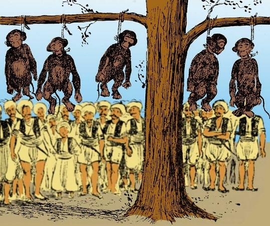 """İstanbul'un maymunlarına ne oldu? Yazı için  tıklayınız. kaynak:www.evrimagaci.com  """"Tüm hikaye bu dini bütün mollanın Fatih Camii'nde verdiği bir Cuma vaazıyla başlıyor, molla, ateşli bir konuşmayla 'kadınların bu maymunları fena işlerde kullandığını' anlatıyor. Cuma çıkışı kızgın kalabalık önde bizim molla, Azapkapı ve Galata'daki maymun satıcılarını basıyor. Tarihçiler o günü 'İstanbul'da dalında maymun sallanmayan tek bir ağaç kalmadı.' diye anlatır. Molla, yakalanan maymunları kendi elleriyle asıyor, iri maymunlar için ayrı idam sehpası hazırlıyor. İstanbul'un maymunlarının hikayesi maalesef bu şekilde sona eriyor, yapılan katliama tanık olan halk o günden sonra mollaya 'maymunkeş' lakabını takıyor. Tarihçiler, Maymunkeş Abdülkerim Efendi'nin vefatında birçok hayvansever İstanbullu'nun kutlamalar yaptığından bahseder."""""""