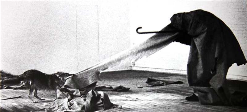 Joseph Beuys - Ben Amerika'yı Seviyorum, Amerika da Beni seviyor (1974) Beuys performans için Almanya'dan New York'a uçar. uçaktan direkt olarak bir ambulansa alınır ve sedyeyle performansın yapılacağı galeriye gider. Galeride onu bir kır kurdu/coyote beklemektedir. 3 tam günü galeride bu hayvanla geçirir. Kır kurdu kendisine zarar vermesin diye etrafını keçeyle sarmıştır, üçüncü gün kır kurduyla araları da gayet iyidir.Performans bitince yine ambulansla hava alanına gider. Beuys,New Yorklu sanatçılar, sanat çevreleri, gazeteciler, entelijansiya yerine sadece bir çakalla tebelleş olup ayağını ABD'ye değdirmeden geri dönerek beyaz Amerika'nın tamamınıprotesto eder.  Ayrıca kır kurdu, amerikan yerlileri için kutsaldır; iki dünyayla iletişim kurabildiklerine inanılır. Beyaz adam geldikten sonra kır kurtlarını çakallar gibi kötü sıfatlarla andıve büyük bir katliamlara tabii tuttu.Şaman değerlere sahip Beuys beyazların statüsü elinden aldığı kır kurtlarını böylelikle onore etmiş oldu.