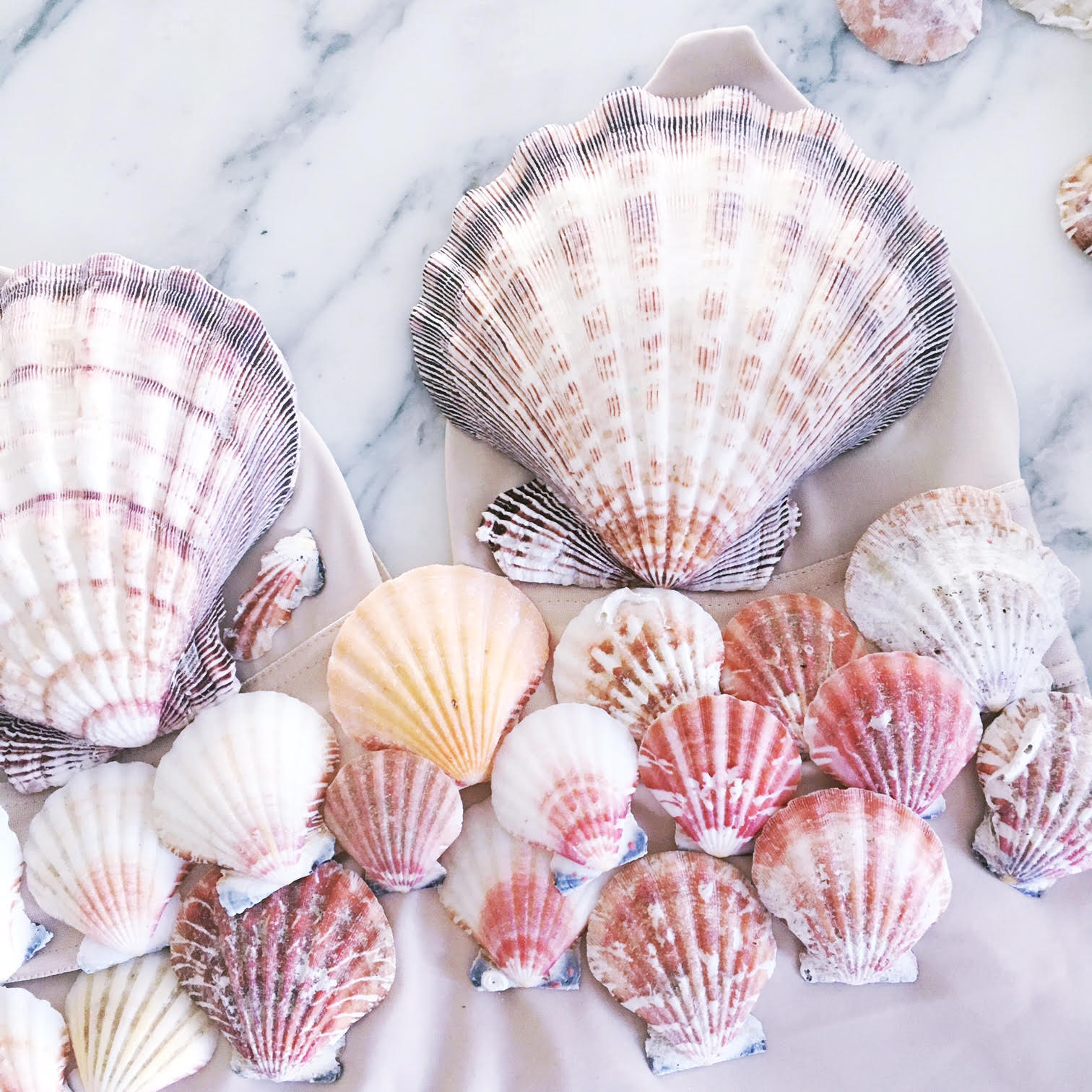 We found these amazing pink shells that we loved.
