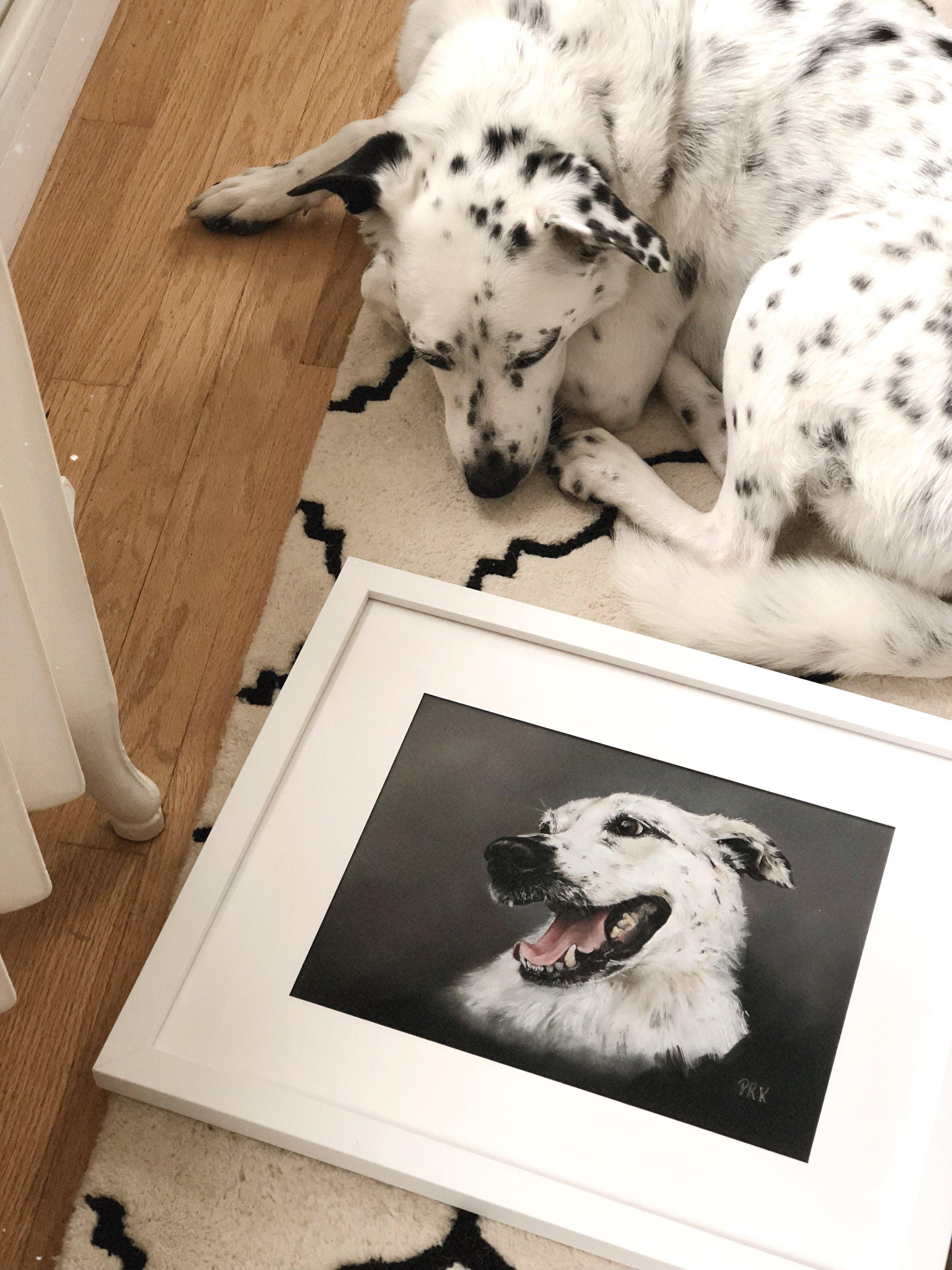 Pet portrait photo 2 .JPG