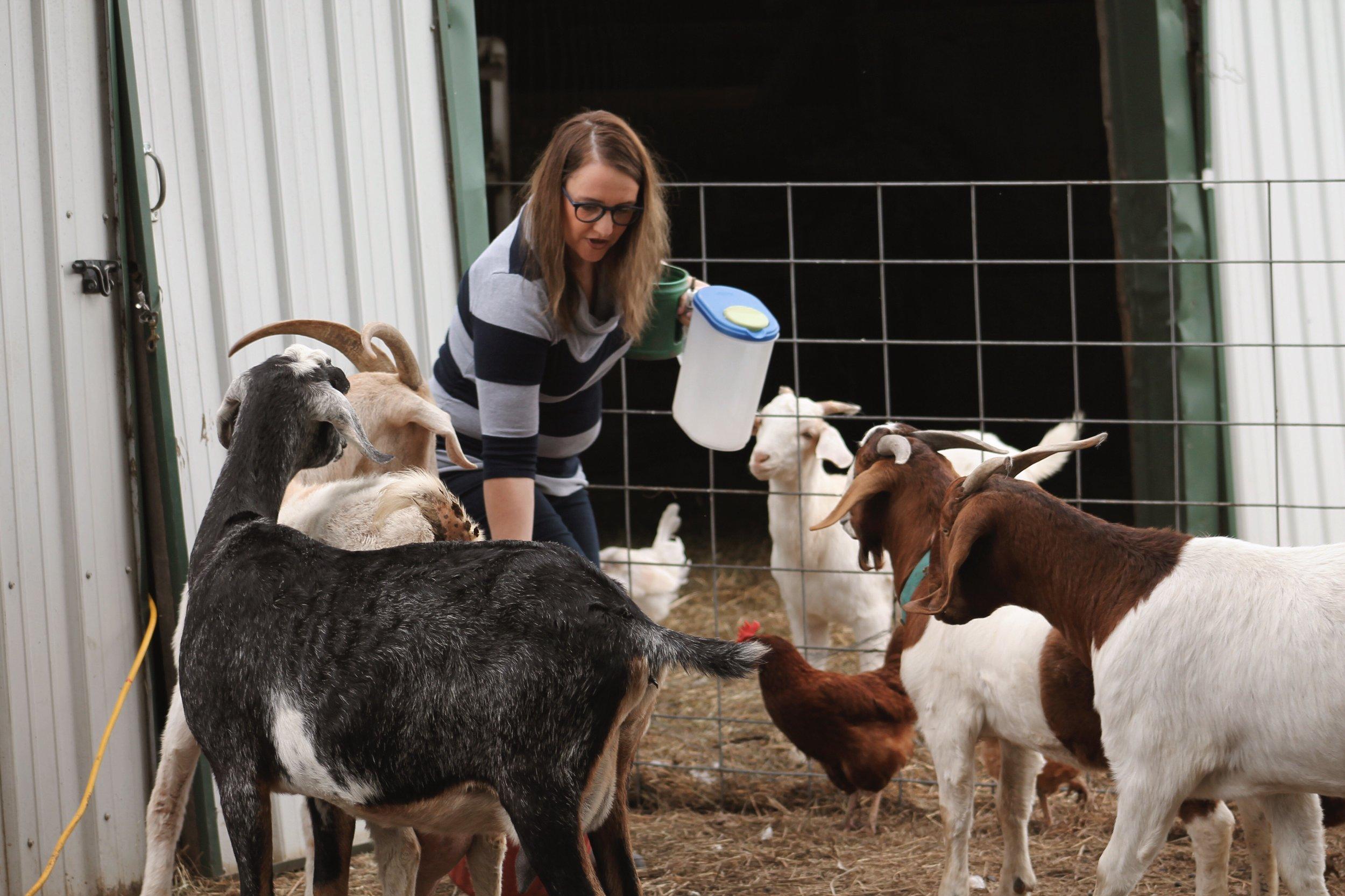 Farm sweet farm Oklahoma 14.JPG