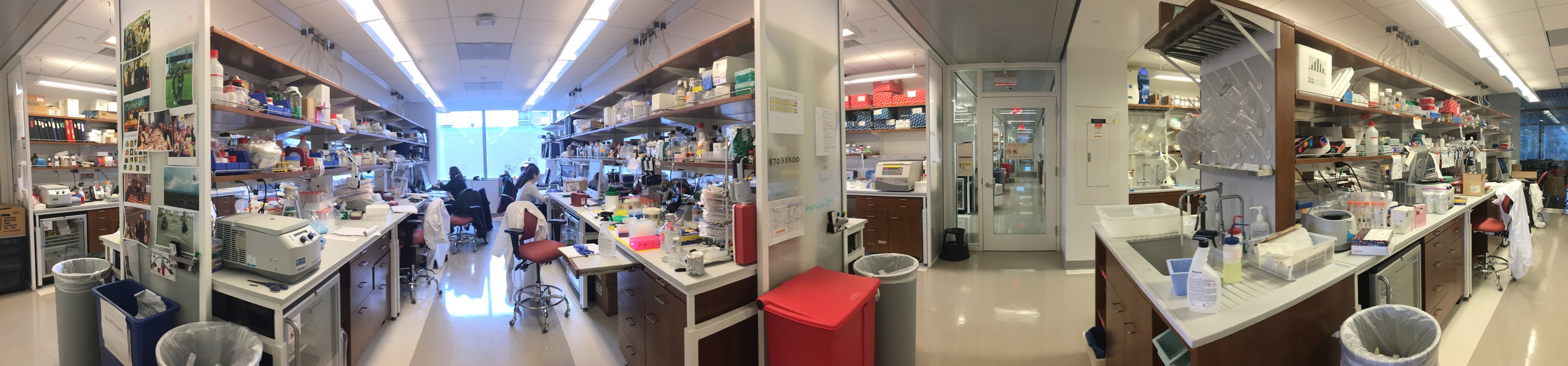 Main lab space on the 11th floor of Belfer Research Building.
