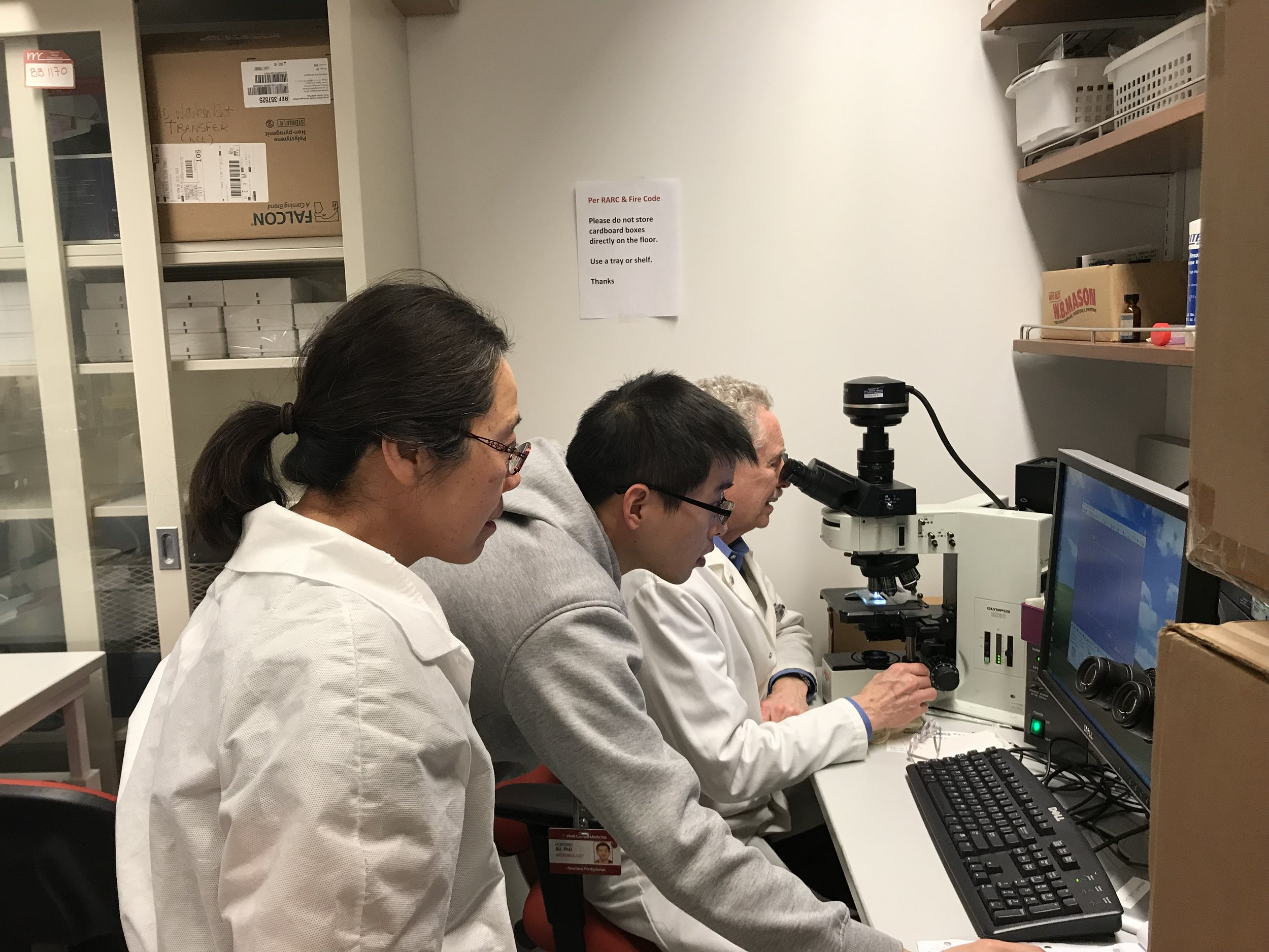 Carl and team focusing on isolated neutrophils in the microscope room.