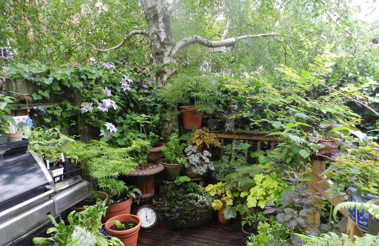 Back Deck Container Garden