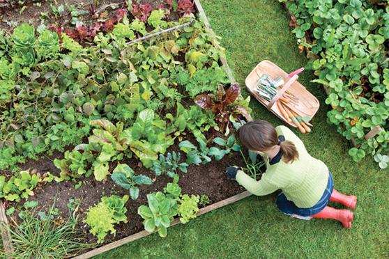 Planting City Harvest Plot