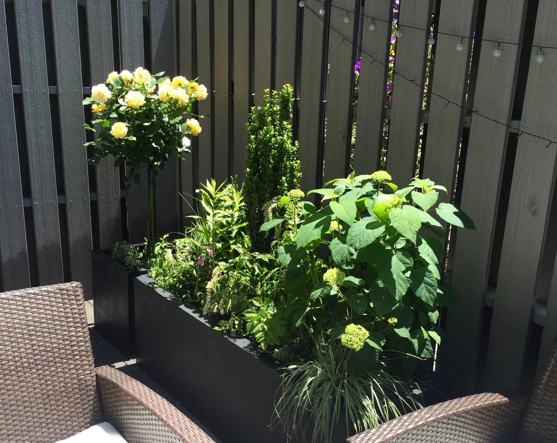 Bella Vista Sun Container Garden