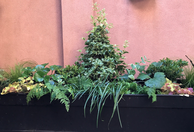 Addison Addison Street Shade Evergreen Container