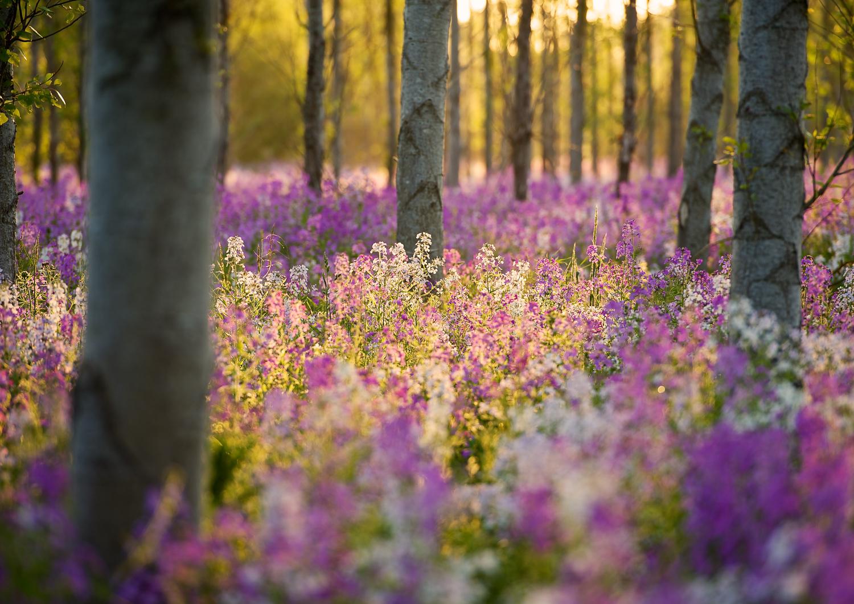 Wendling Wildflowers