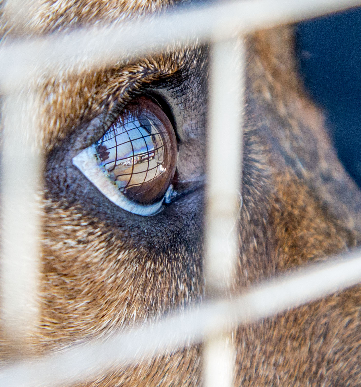 A dog peers out the bars of it's carrier before it is loaded onto the Rescue Express bus with other animals in a gas station parking lot in Tulare, California. A number of the animals transported by Rescue Express are animals that had they not gotten on the bus, would have been put to death.