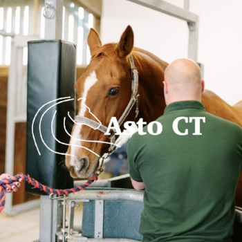 Horse Pic Asto CT copy.jpg