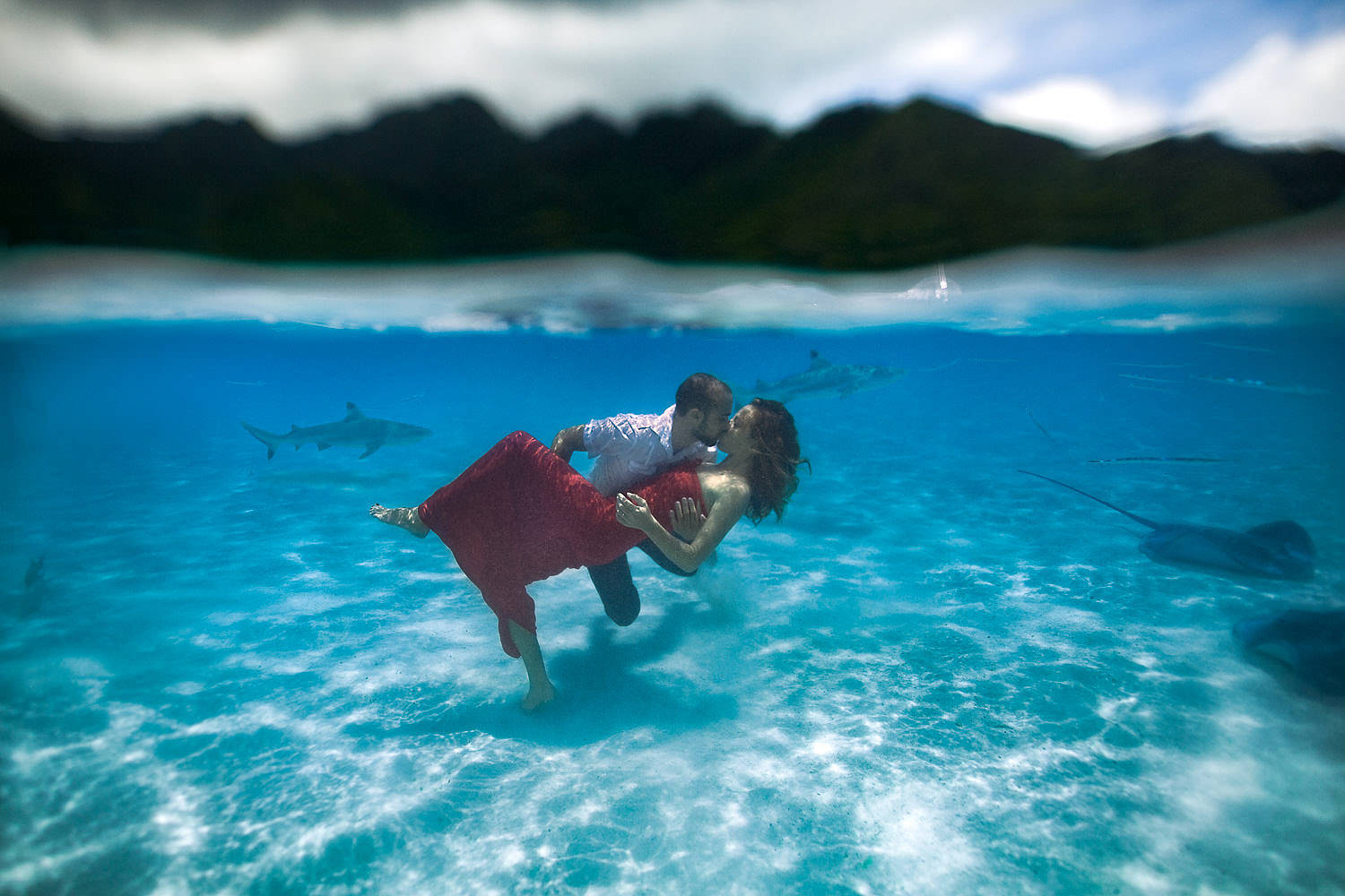 bride and groom kissing in the laggon with sharks circling at mo