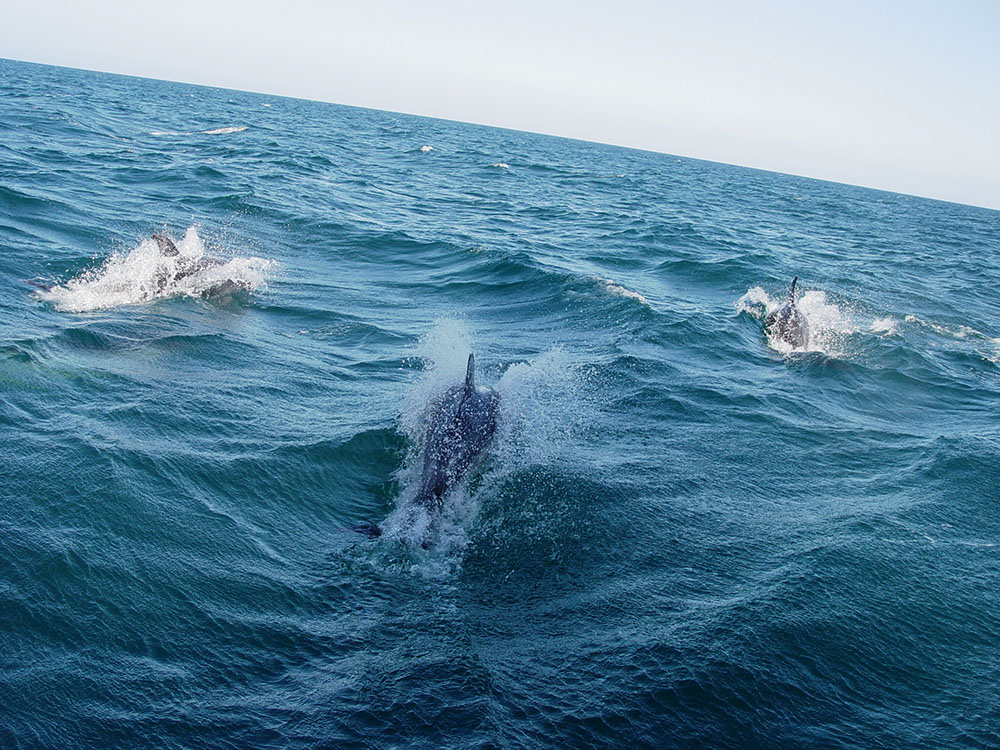 Dolphins in the Abel Tasman