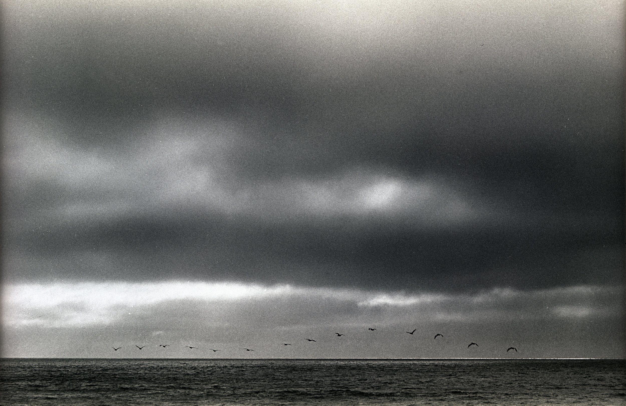 Birds_at_Sea_resize.jpg